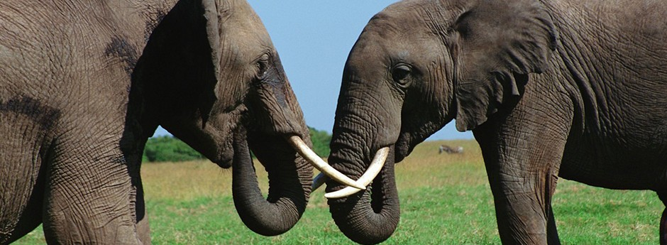 We'll transport you to your unforgettable visits to the Addo Elephant National Park, the Shamwari Game Reserve and many others.