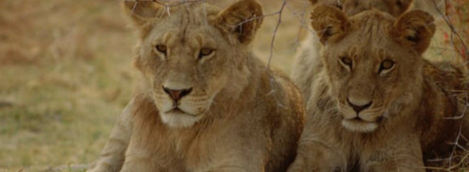 Experience the unique opportunity to encounter wildlife first hand at Seaview Predator Park.